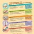 5 kroków do bezpiczeństwa żywności